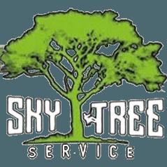 Tree Service – Palm Tree Service