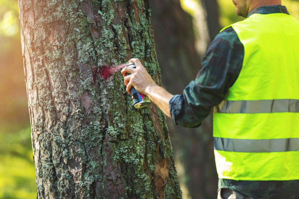 4 Reasons Why You May Need To Call Tree Removal Services