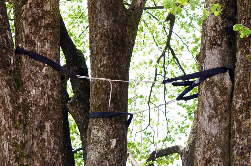 Difference Between Tree Bracing And Cabling