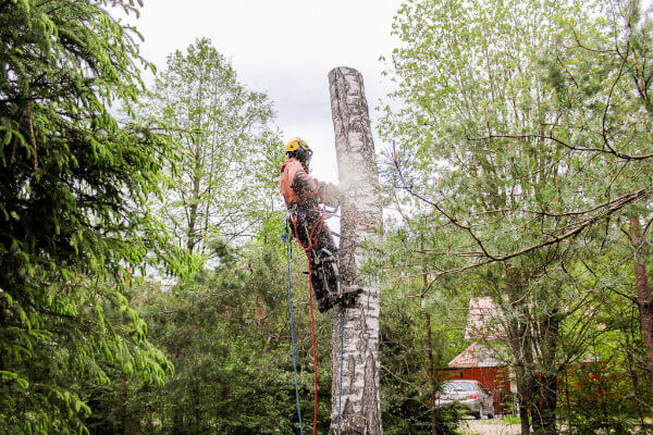 Three Tree & Shrub Pests To Watch