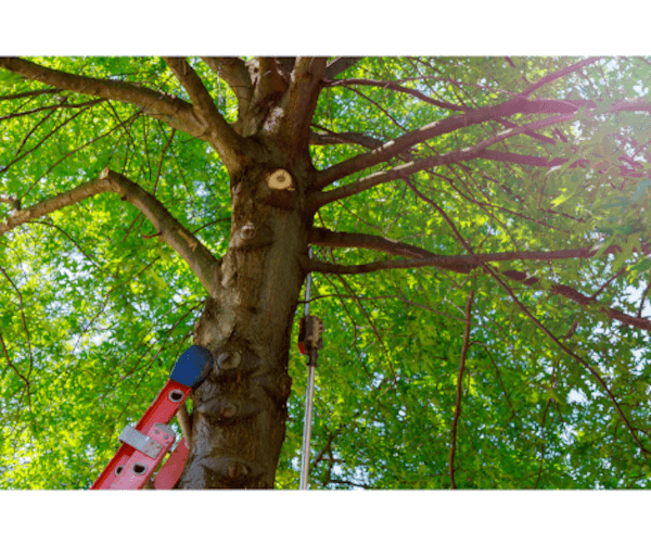 Performing A Tree Species Analysis